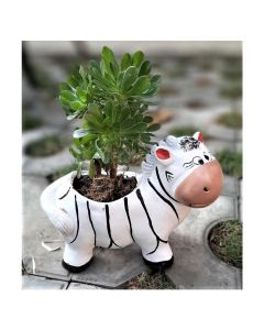 Zebra Pot - Bloom Bagicha