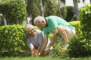 easy gardening tips & tools for seniors