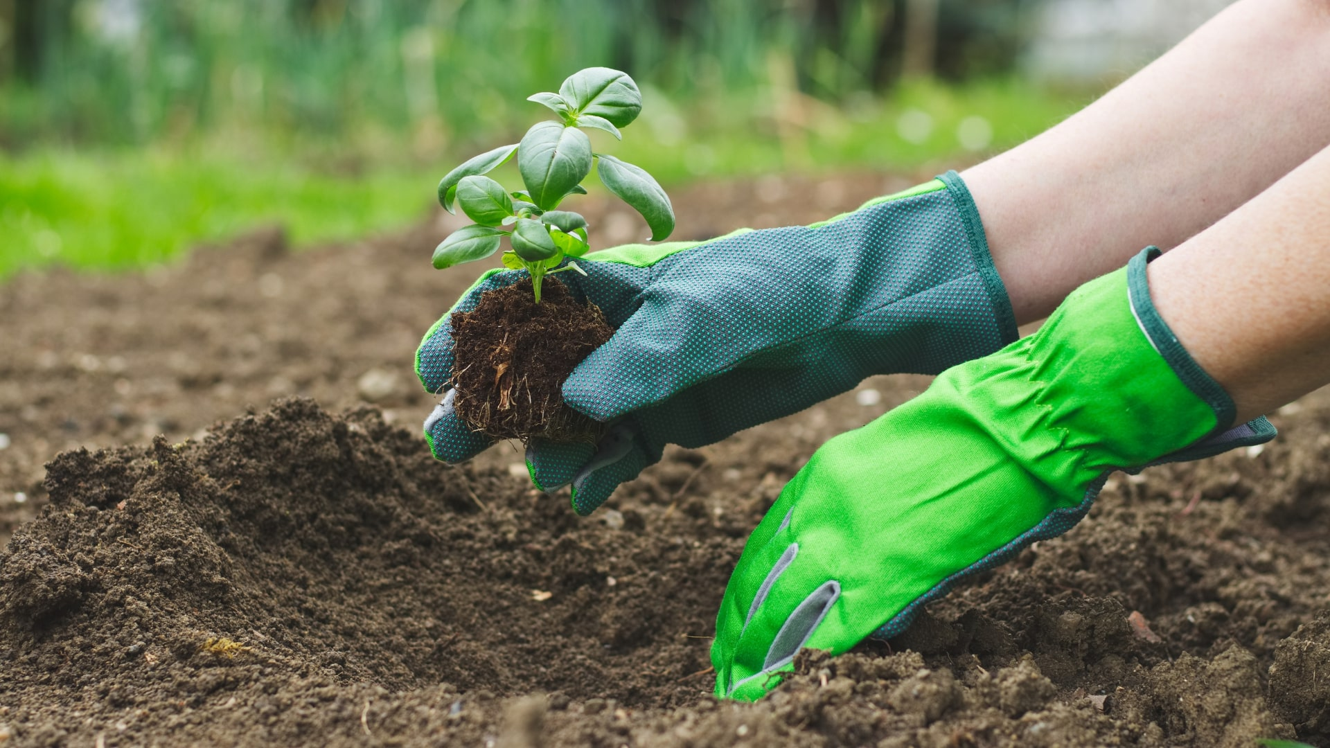 Important Benefits of Composting at Home